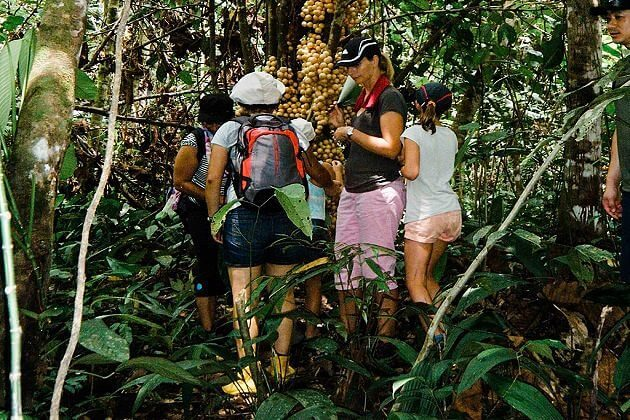 Borneo Rainforest Discovery – Malaysia tours