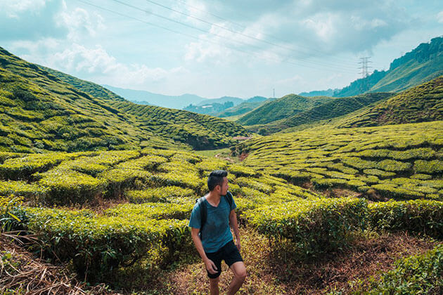 Cameron Highlands - malaysia tour packages