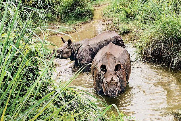 Chitwan National Park - south asia tours