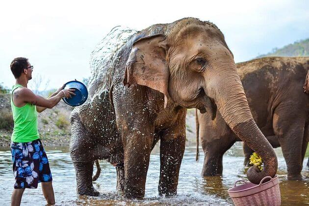 Elephant Nature Park - southeast asia adventure