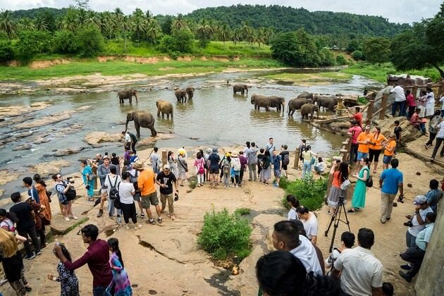 Elephant Orphanage at Pinnawala