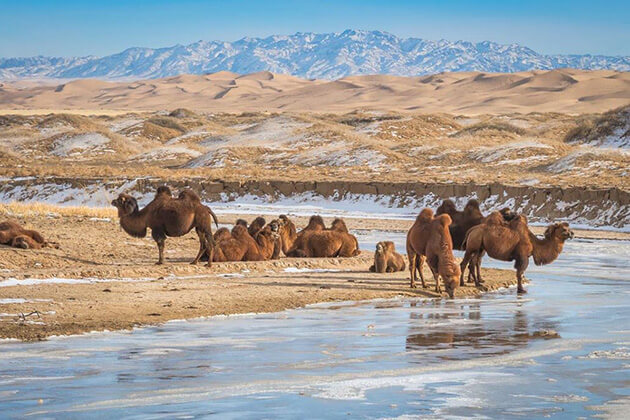 Gobi - china mongolia tours