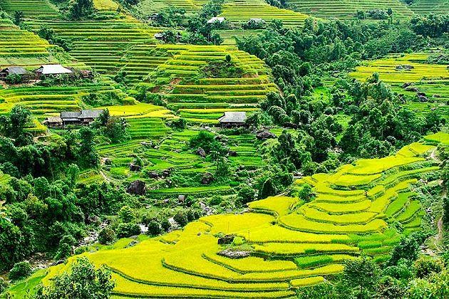 Hoang Su Phi rice terrace - things to do in vietnam