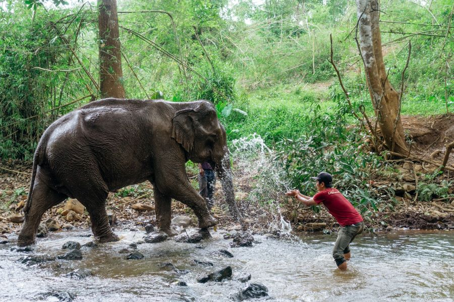 Jewel Land Elephant in laos