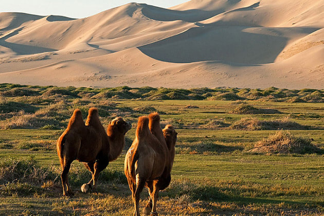 Khongoryn Els - china and mongolia tours