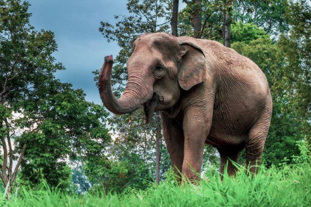 Maetaman Elephants Camp in thailand