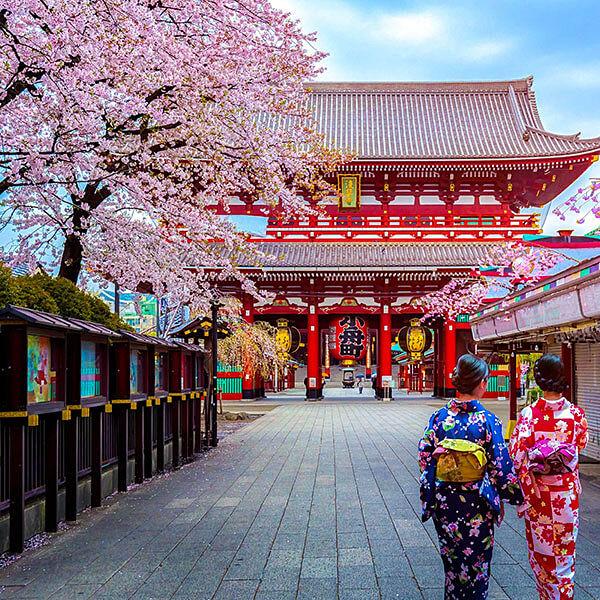 Multi Country Asia Tours - Sakura