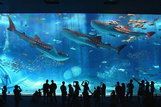 Osaka's Ring of Fire Aquarium - japan family tour package