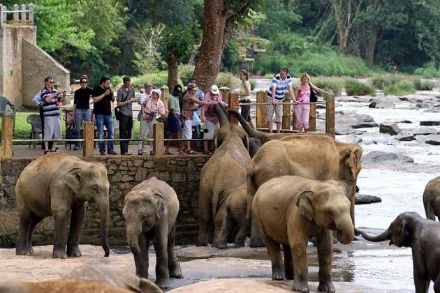 Pinnawala Elephants Orphanage - 23 days south asia tours