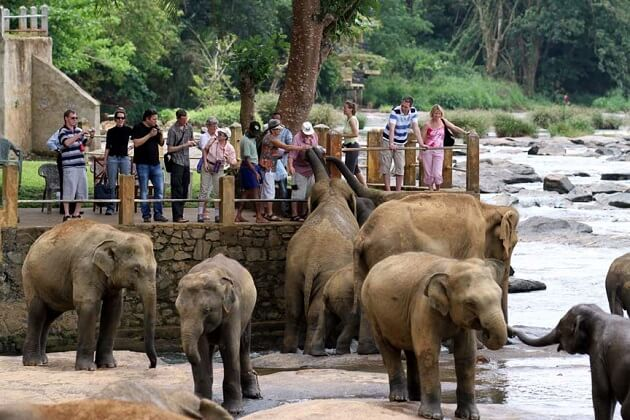 Pinnawala Elephants Orphanage - 23 days south asia tours