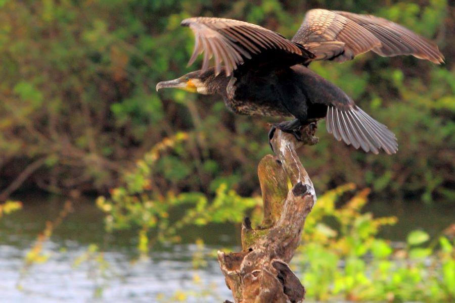 Prek Toal Lake of Bird