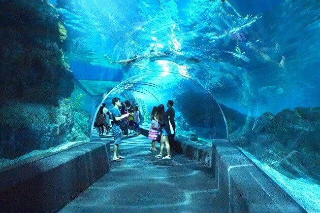 Sea Life Bangkok Ocean World - thailand family tour package