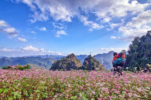 Take a Photo of Buckwheat Flower in Ha Giang