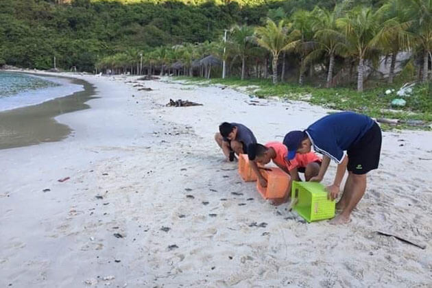 Turtle Hatchling Release on Con Dao Island