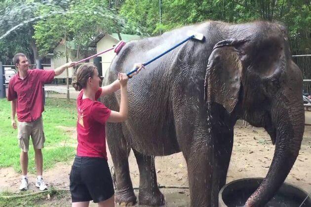 Wildlife Friends Foundation - family tour to thailand