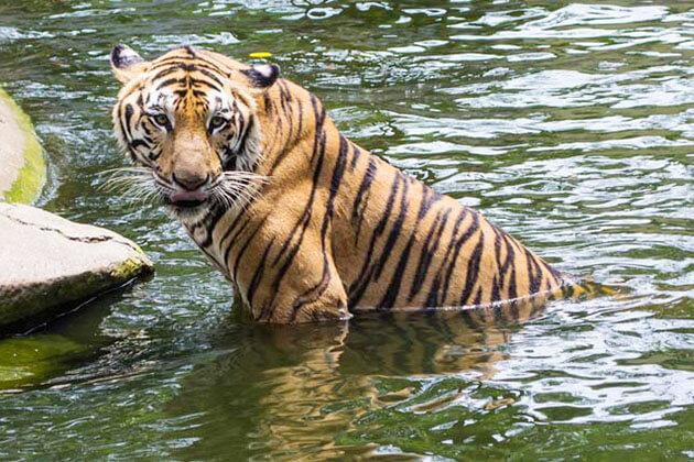 Periyar National Park - india vacation packages