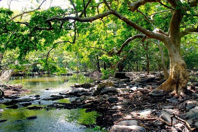 Wilpattu National Park - sri lanka 2 weeks budget