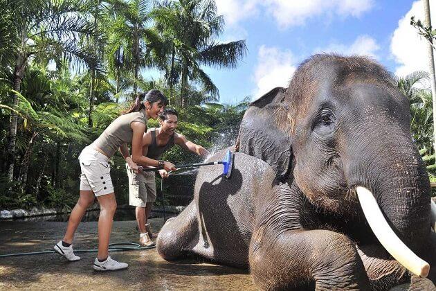 bathe with elephants