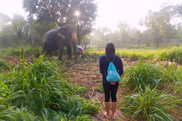 elephants experience - sri lanka tour packages