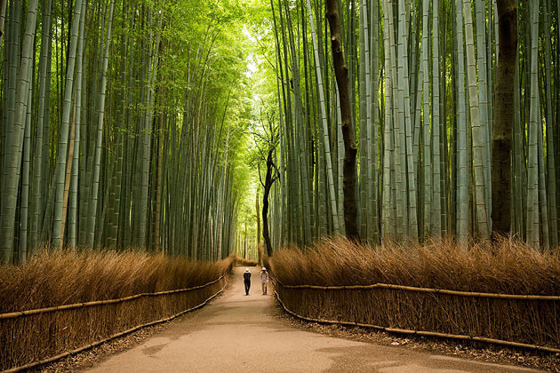 japan things to do and see - arashiyama bamboo forest