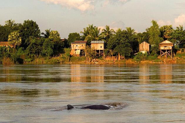 kratie - vietnam cambodia laos myanmar tour