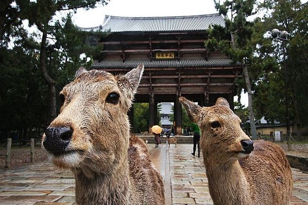 nara deer park - japan south korea taiwan tours