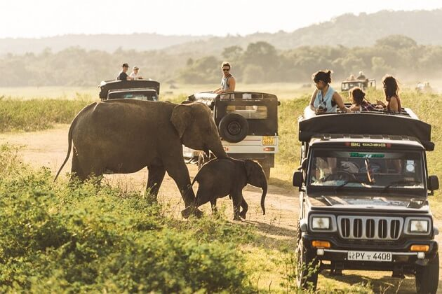 safari - south asia vacation packages