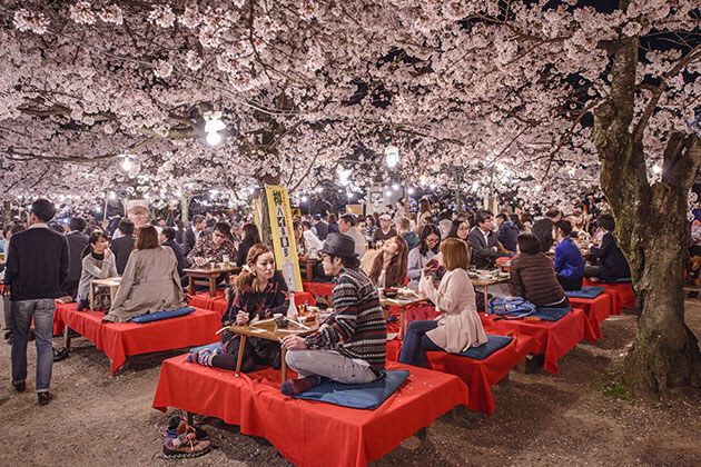 sakura - best japan tours