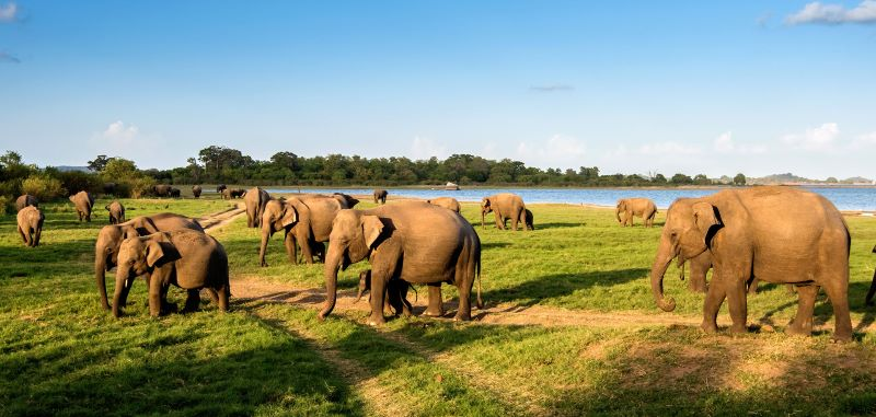 south asia tour packages to sri lanka