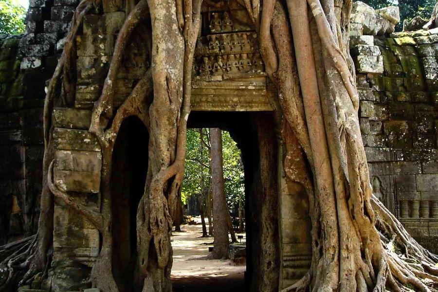 ta prohm in siem reap cambodia