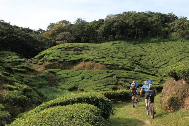 tea plantations - india best cycling