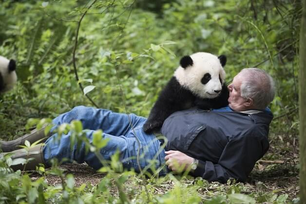travel china panda tour