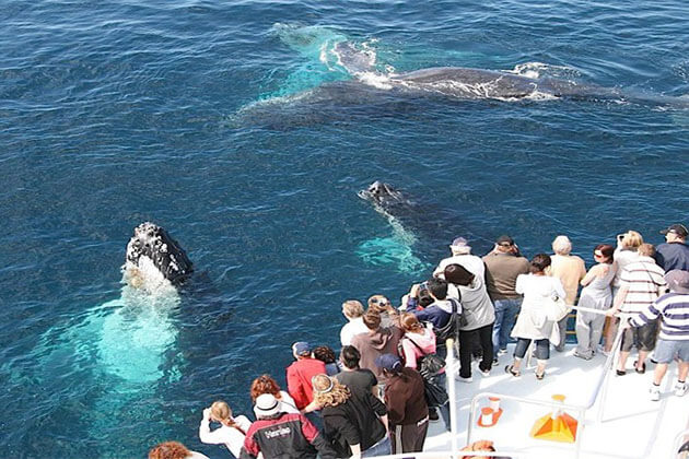 whale watching - sri lanka tours